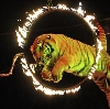 Цирки в Шалинском